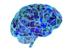 brain-951874_640